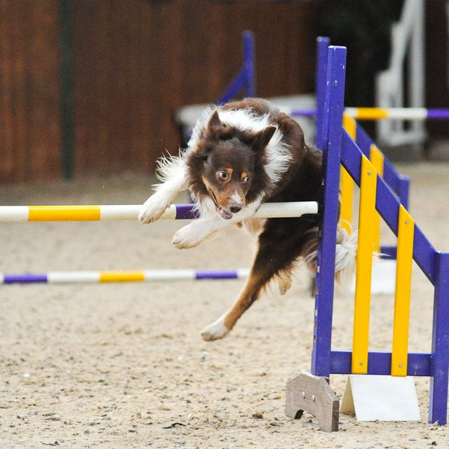 Dogagility Event Photos